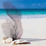 beach-84565_640
